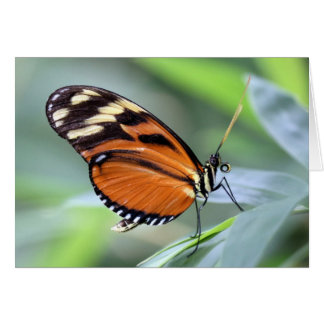 Greeting card - Butterfly1