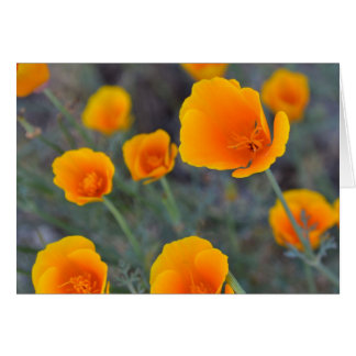 Greeting Card - California poppies