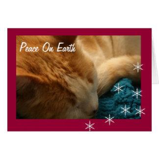 Greeting Card: Christmas Cat Nap Ephesians