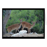 Greeting Card Deer-Tarjeta de felicitacion Ciervos Tarjeta De Felicitación