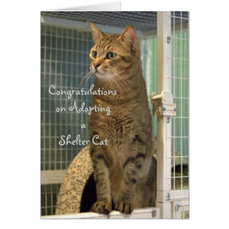 Greeting Card for Adoption of a Shelter Cat