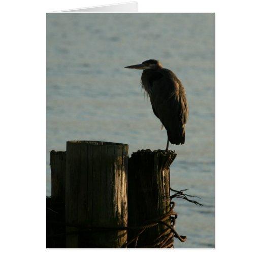 Greeting Card:  Great Blue Heron Greeting Card