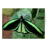 Greeting Card: Green Butterfly