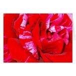 greeting card hablas rose close up tarjetas