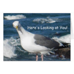 Greeting Card:  Here's Looking at You Gull