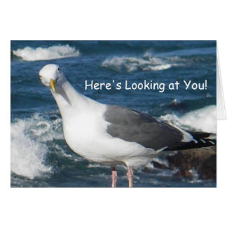 Greeting Card:  Here's Looking at You Gull Greeting Card