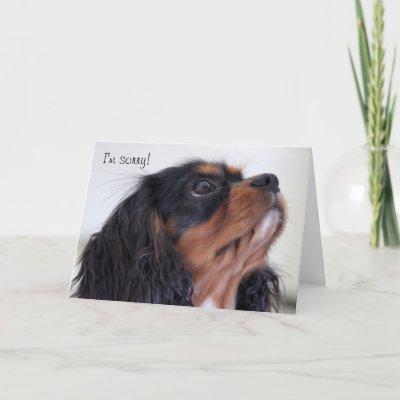 Greeting Card - I'm Sorry