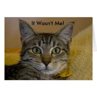 Greeting Card:  It Wasn't Me Cat Greeting Card