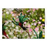 GREETING CARD - Kangaroo Paw