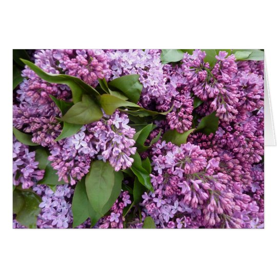 GREETING CARD Lilacs in bloom