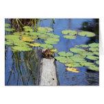 Greeting Card - Lily Pad Frog