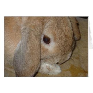 Greeting Card - Lop Eared Dwarf Rabbit