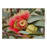 GREETING CARD - Native Australian Eucalyptus