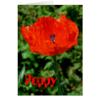 GREETING CARD, PHOTOG., FLORAL, RED POPPY, BLANK CARD