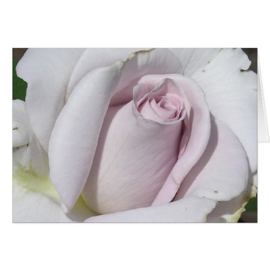 GREETING CARD, PHOTOGRAPHY, FLORAL, WHITE ROSE CARD