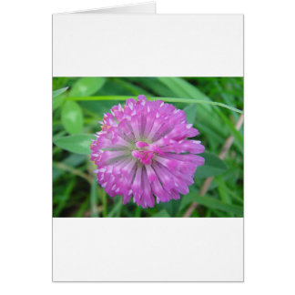 Greeting card pink cloverblossom