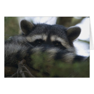 Greeting Card: Racoon
