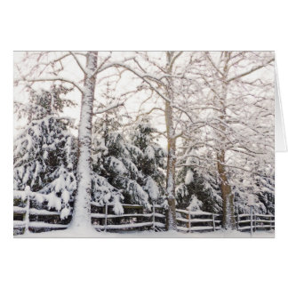 GREETING CARD/SNOW-LADEN EVERGREEN BRANCHES STRETC CARD