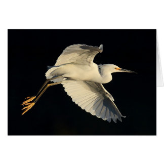 Greeting Card - Snowy egret flyby