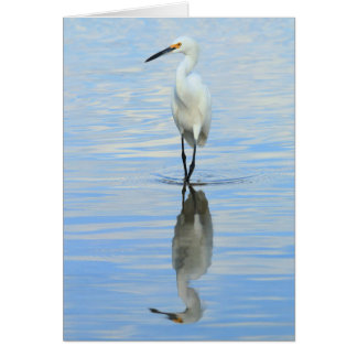 Greeting card - Snowy egret turning