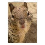 Greeting Card - Squirrel