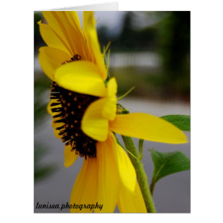 Greeting Card:  Sunflower Card