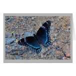 Greeting Card  - Swallowtail Butterfly