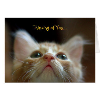 Greeting Card with Adorable Orange Tabby Kitten