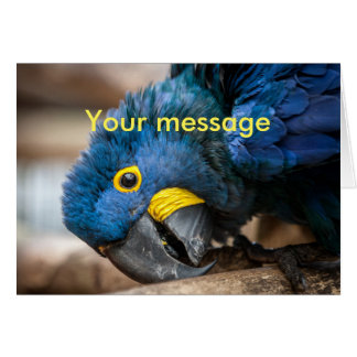 Greeting card with blue Hyacinth Macaw parrot