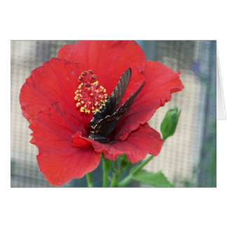 greeting card with butterfly on red flower