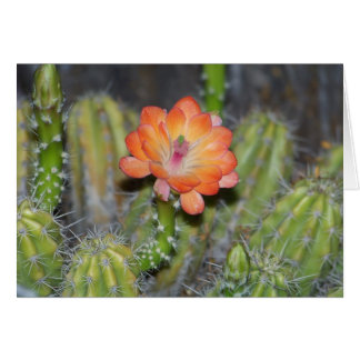 Greeting Card with Orange cactus flower