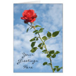 Greeting Card with Single Red Rose