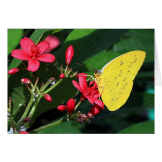 Greeting card - Yellow butterfly
