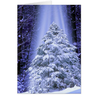 GREETING CARDS   SPECIAL CHRISTMAS TREE
