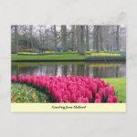 Keukenhof Garden Greetings from Holland Postcard