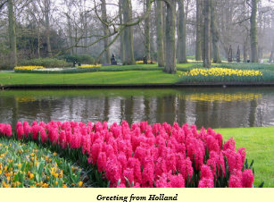 Narcissus daffodil cards greeting photo cards zazzle greeting from holland postcard m4hsunfo
