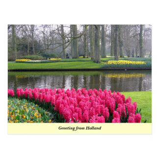Greeting from Holland Postcard