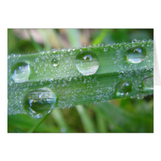 Greeting map blade of grass with water drops, in b greeting card