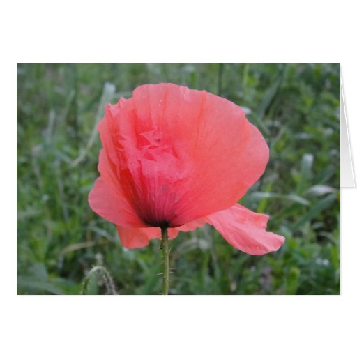 Greeting map red poppy flower: have A happy day Card | Zazzle