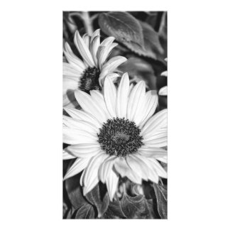 Greeting map - sunflower black-and-white card