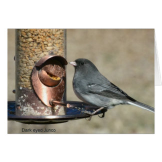 Greeting or Note Card with Dark Eyed Junco