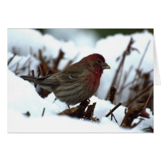 Greeting  or Note Card with house finch