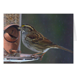 Greeting or Note Card with white throated sparrow