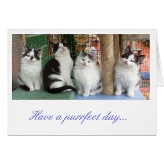 Greetings Card: Kitten Line Up Card
