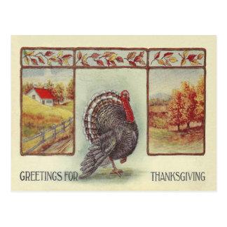 Greetings For Thanksgiving Postcard