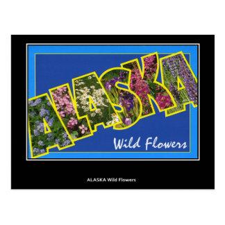 Greetings from Alaska Vintage Postcard