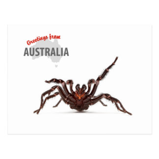 Greetings From Australia - Funnel-Web Spider Postcard