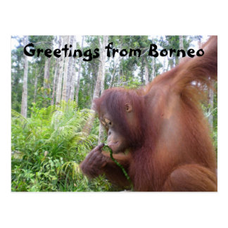 Greetings from Borneo Post Cards