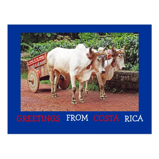 Greetings from costa rica postcard oxen oxcart zazzle greetings from costa rica postcard oxen oxcart m4hsunfo