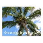 palm, florida, tree, sky, green, vacation, fun,